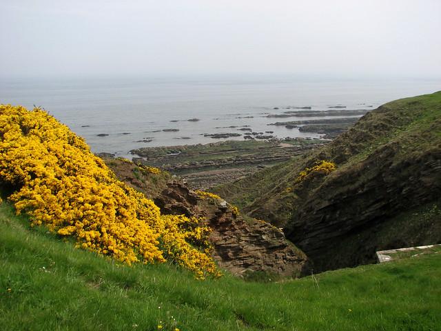 The coast near Spittal