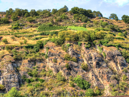 vineyard vines landscape agriculture field scenic trees tranquil nature plants green winemaking cliff rocks steep rockface sky clouds rhine rhinevalley river