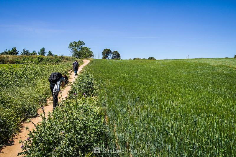 Caminando por el GR-97-3 en Gallecs