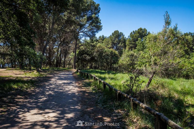 Bosc de Can Mulà