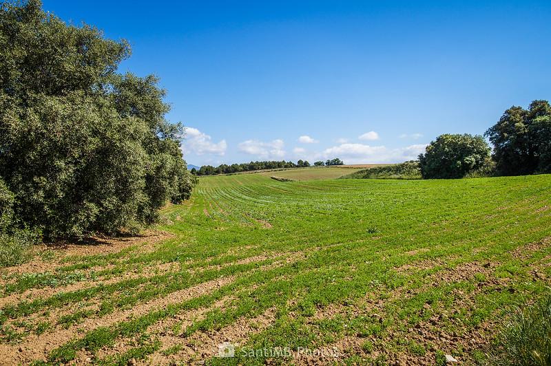 Campos de Gallecs desde un extremo del Bosc de Can Jornet