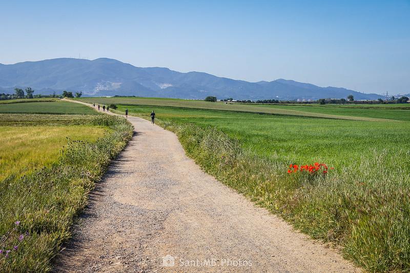 Camí dels Bandolers en Gallecs