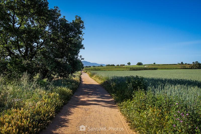 Camino en Gallecs