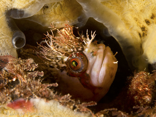 puget sound scuba diving mosshead warbonnet sunrise beach underwater
