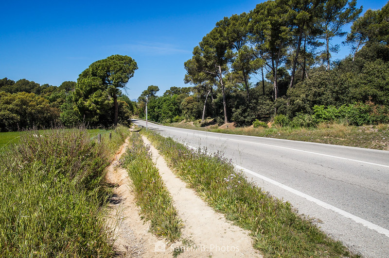 Camino al Bosc de Can Mulà junto a la C-155