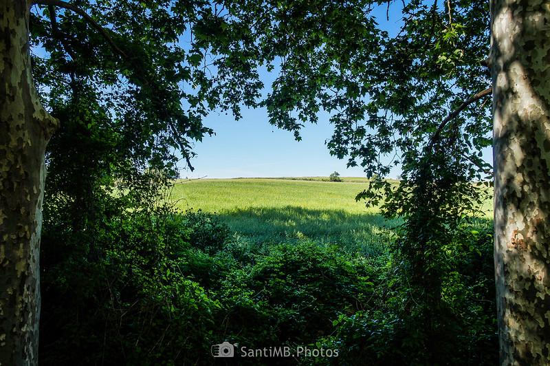 Campos de Gallecs desde el Caganell