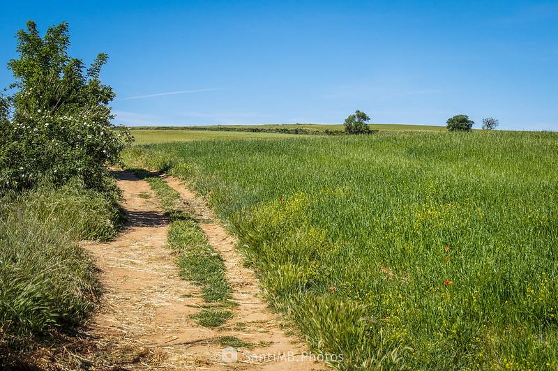 Camí del Forn llegando al del Torrent Caganell en Gallecs