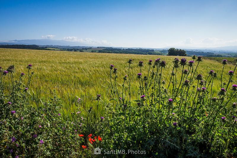 El Montseny y el Montnegre desde el Camí dels Bandolers en Gallecs