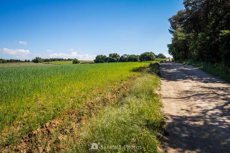 Camino de la Torre d'en Malla a la altura de Can Jornet de Gallecs
