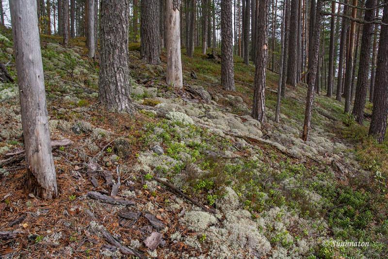 Petkeljärvi (7)