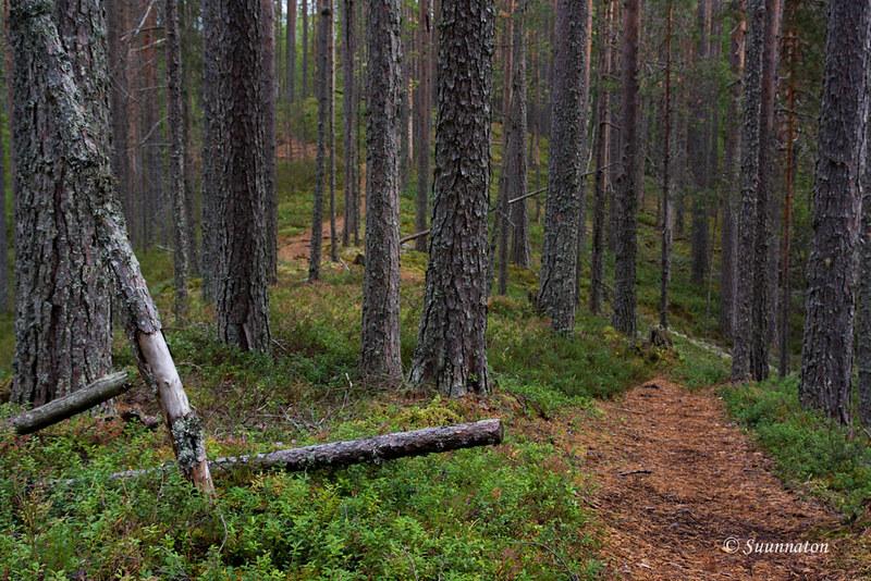 Petkeljärvi (6)