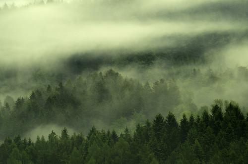 oostenrijk österreich travel spring pentax pentaxk50 landscape view nature trees forest hills mountains clouds mist pentaxaustria niederösterreich