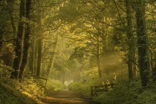 winsford england unitedkingdom whitegate cheshire woodland tress forest sunrise mist path gate green