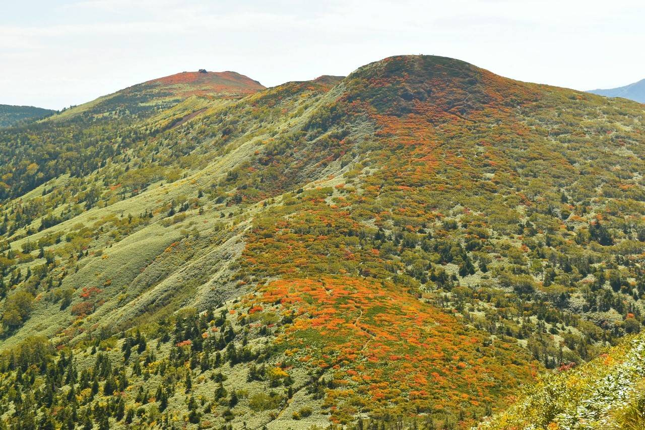小畚山の紅葉
