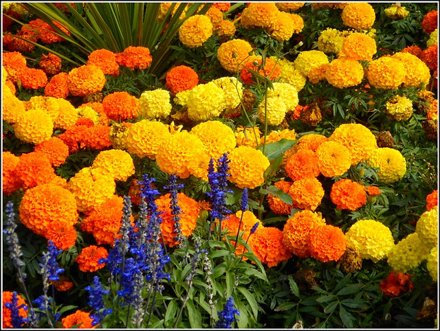 Colourful Flower Bed ...