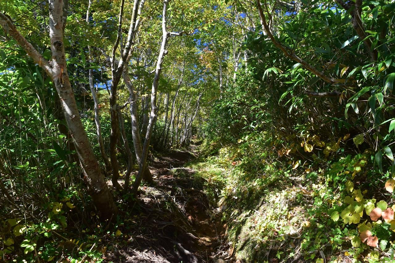 源太ヶ岳 森のトンネル