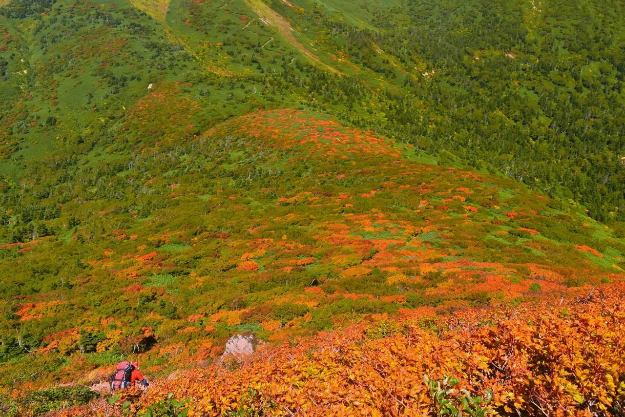 小畚山 一面の紅葉風景
