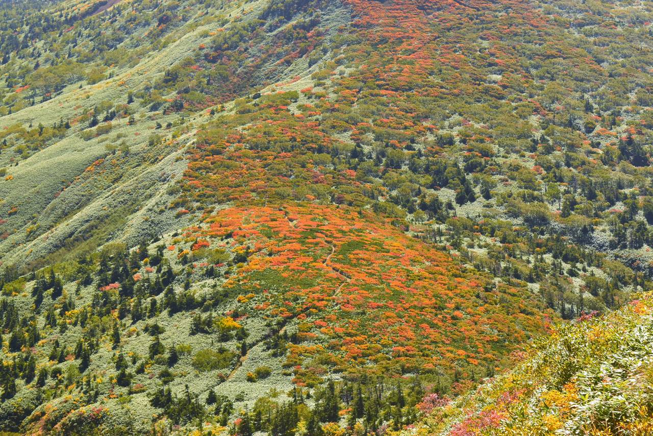 小畚山の紅葉風景