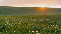 Fields along the Hulahula River