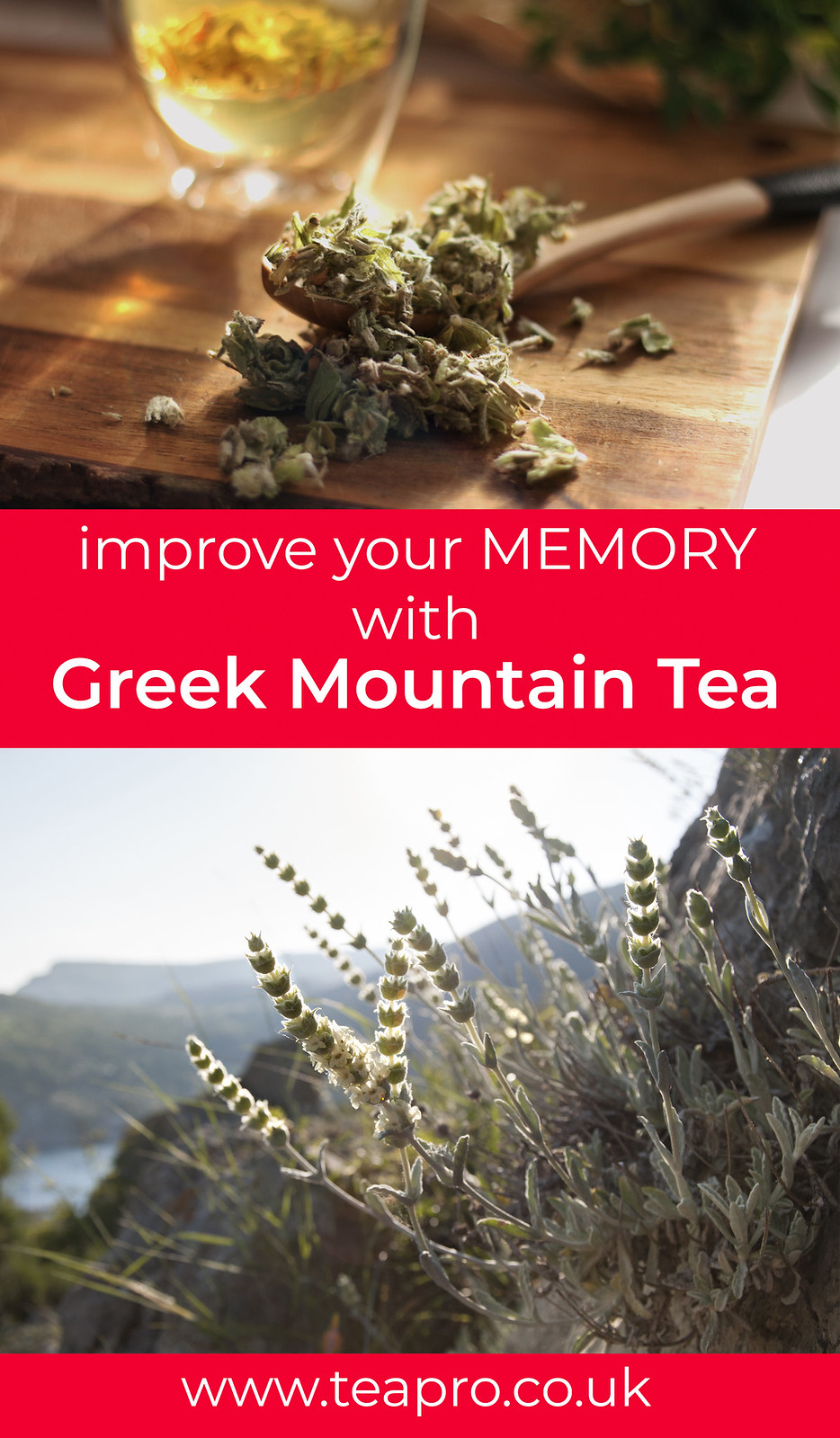 GREEK-mountain-tea-pinterest