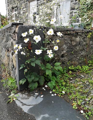 Flowers in a gateway