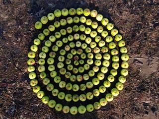 Apple spiral