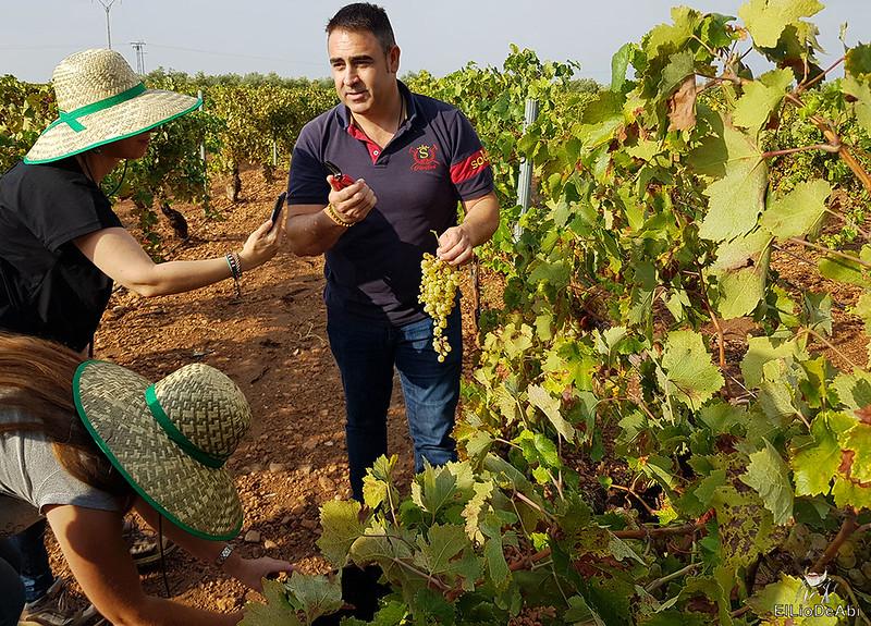 Fin de semana en la ruta del vino de la mancha por tomelloso y su entorno 1