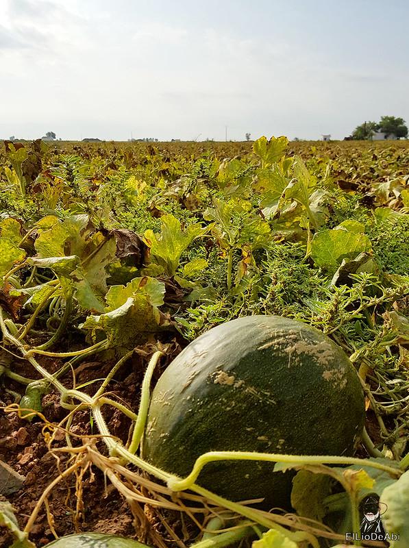 Fin de semana en la ruta del vino de la mancha por tomelloso y su entorno 5