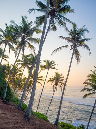 travel traveling worldtravel backpacking asia southeastasia lanka srilanka olympus omd omdem10 m43 sunrise hdr gradient palmtrees beach sea ocean mirissa coconut hill tree