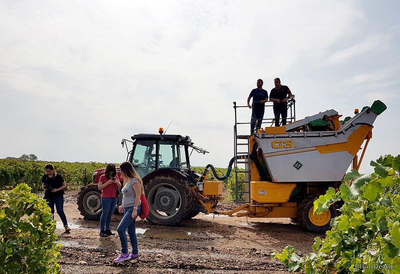 Fin de semana en la ruta del vino de la mancha por tomelloso y su entorno 14