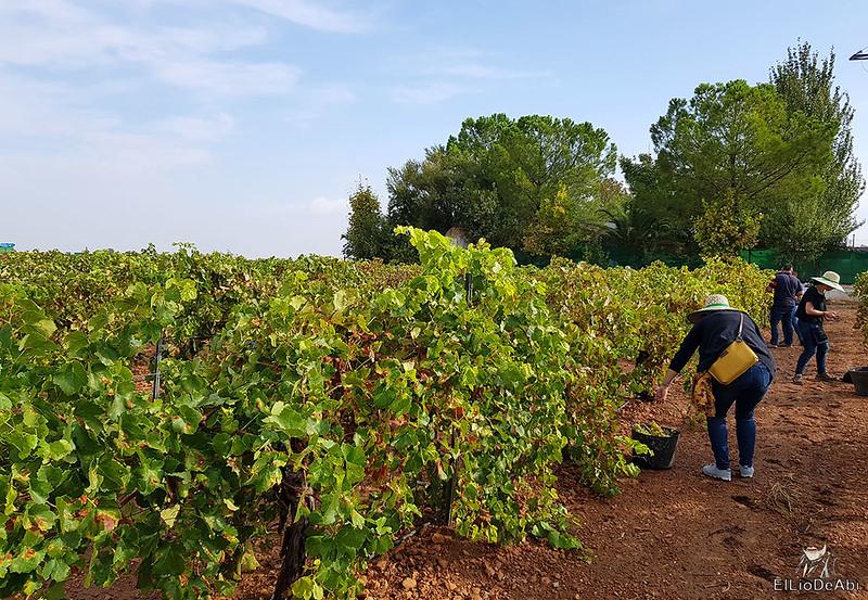 Fin de semana en la ruta del vino de la mancha por tomelloso y su entorno 8