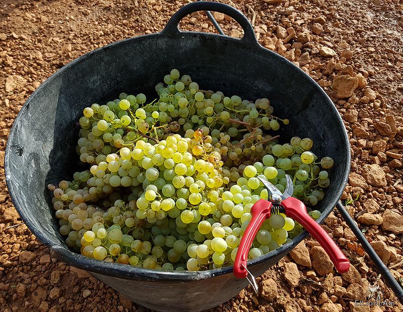Fin de semana en la ruta del vino de la mancha por tomelloso y su entorno 9