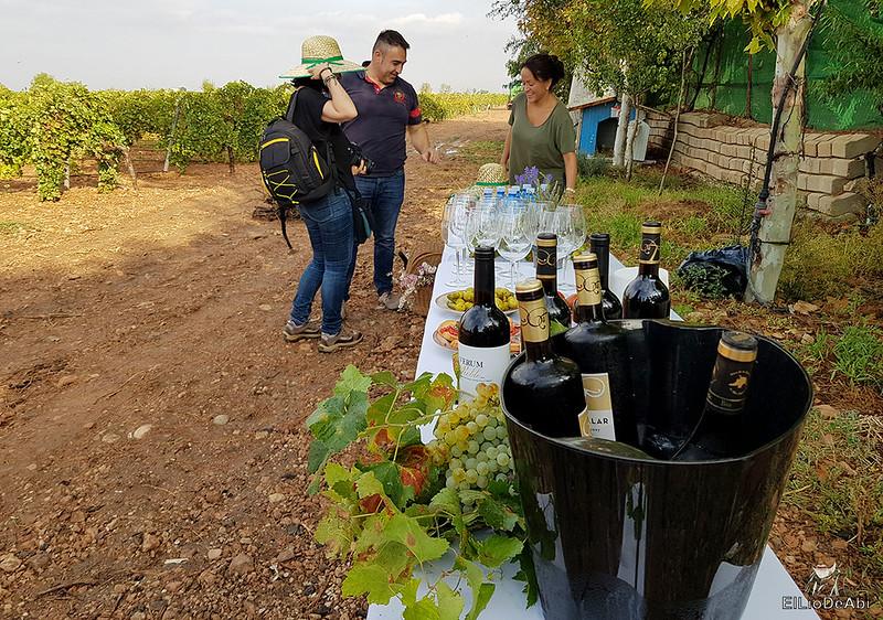 Fin de semana en la ruta del vino de la mancha por tomelloso y su entorno 6