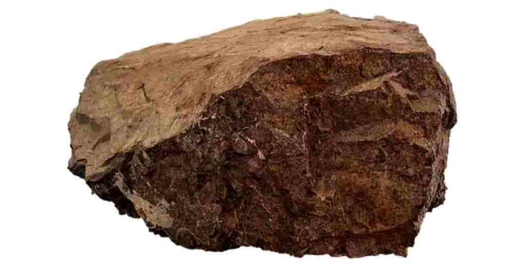 Des microbes fossilisés d'il y a 3,5 milliards d'années