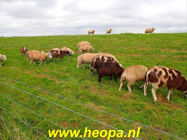 2019-09-24   Zwijndrecht 26 Km (98)