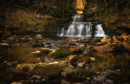 Cotter Force | by Mister Oy