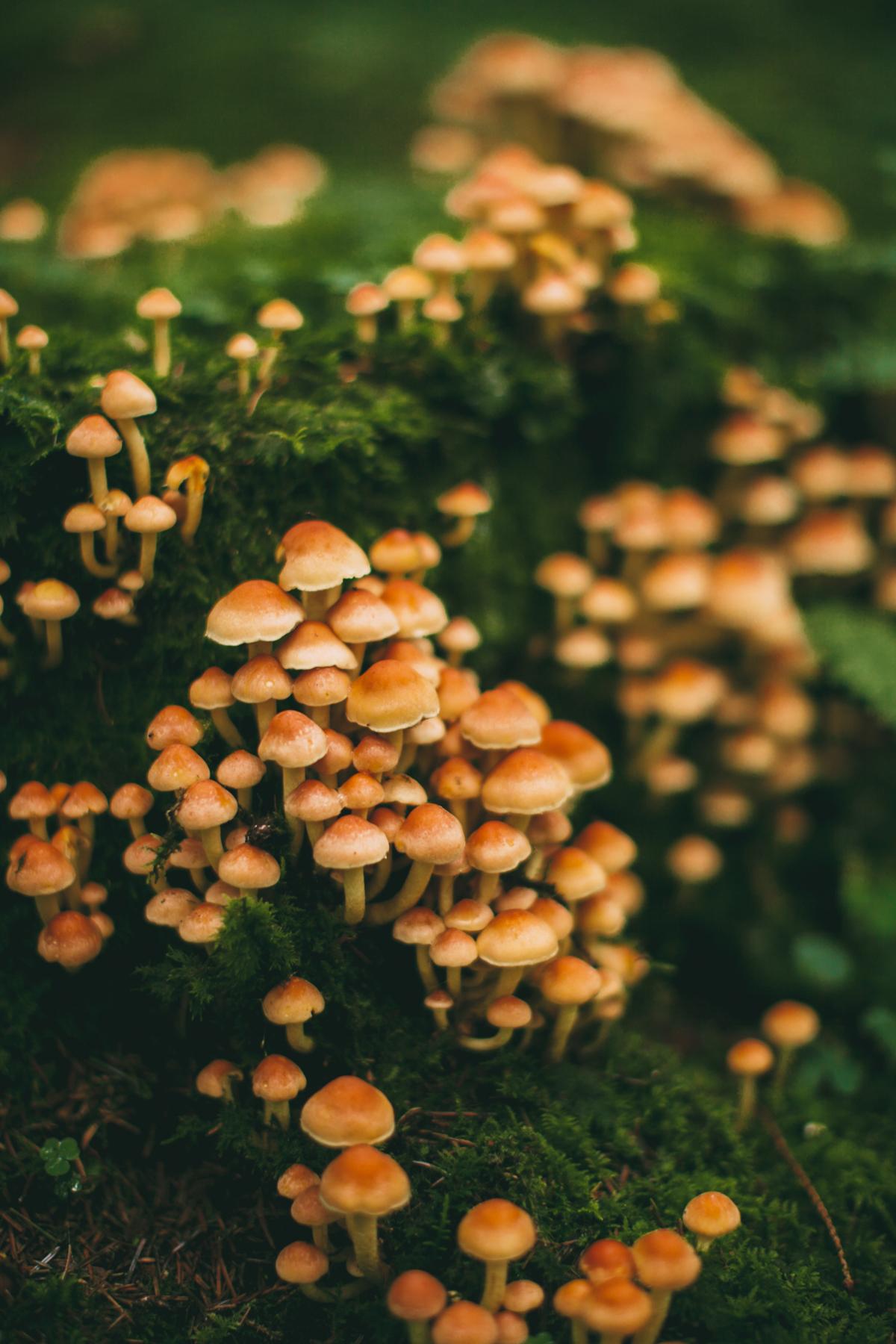 mushroom-17
