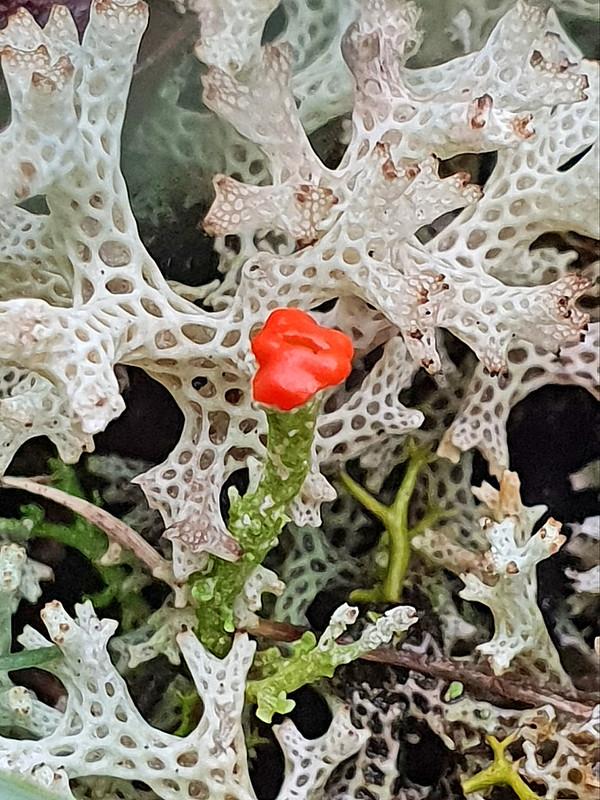 Lichens - 20190907_182712