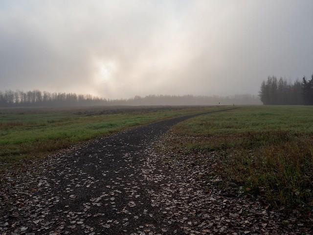 Foggy Morning Walk at Creamer's Field