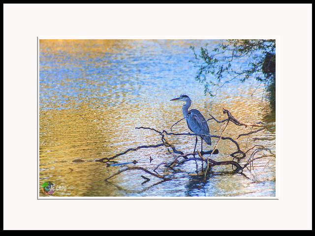 On reconnaît un oiseau en écoutant son chant, on reconnaît un homme en écoutant ce qu'il dit……… ;)