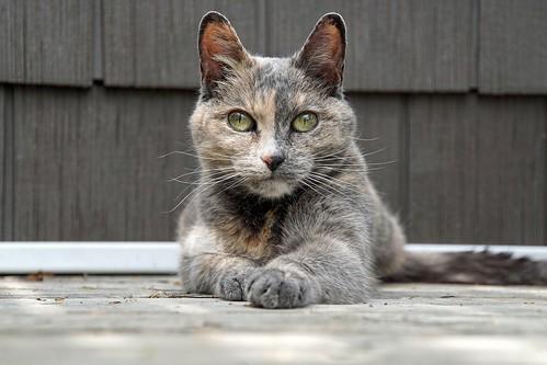 Queen of the deck!