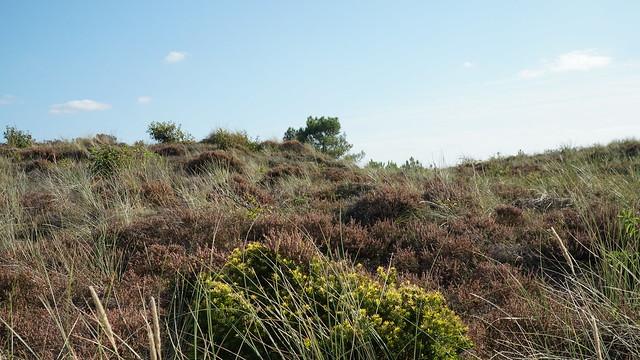 Landscape - Nature