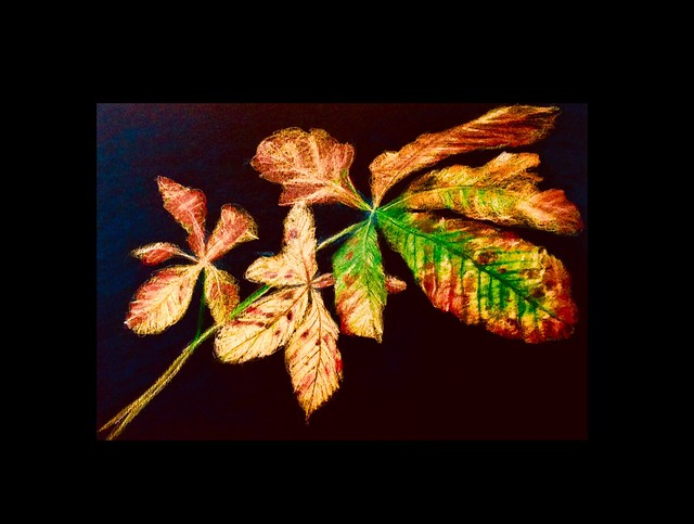 Horse Chestnut Leaves. Last stage of 4. Coloured pencil drawing on black card by jmsw.