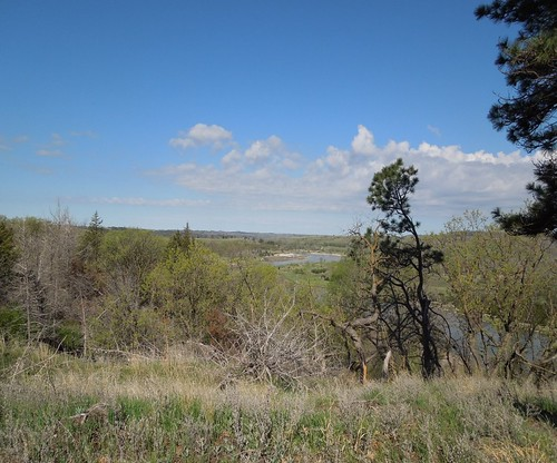 Thu, 09/26/2019 - 10:13 - View from the top of the Niobrara plot in early spring, showing emerging sand hills prairie grasses in the foreground with ponderosa pine.