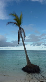 Rooted to the Sea