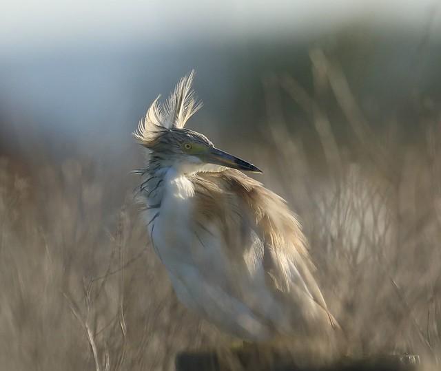 Tailwind...