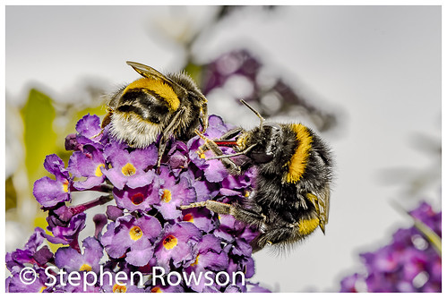 nikon d800 bees nature wales powys macro clear garden sunnydays autom food prepair camera carno google digital landscape country british insect earth climate