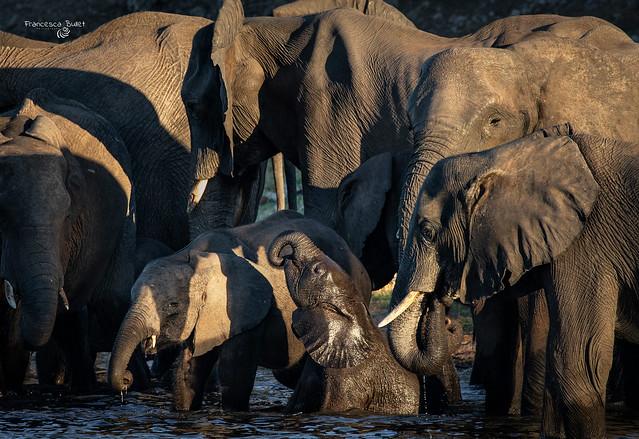 Namibia - Chobe National Park