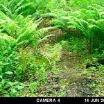 OPET Trail Camera