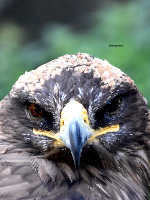 Eagle eyesPhoto taken in castle Hrad Troski in the Czech Republic